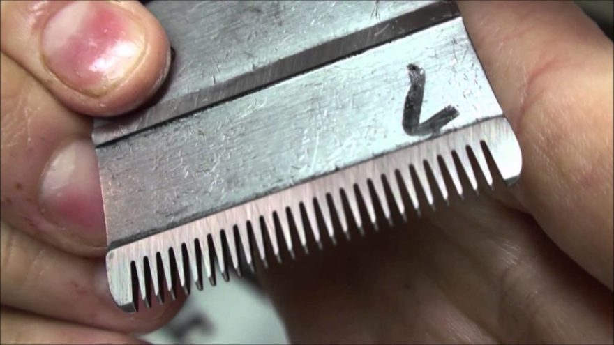 how to clean hair clipper blades
